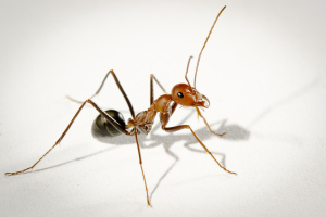 photo of ant