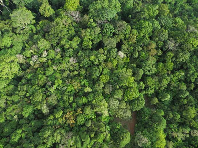 conservation_drone_cambodia_forest