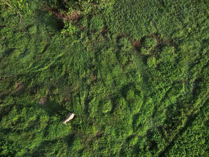 conservation_drone_elephant_detection