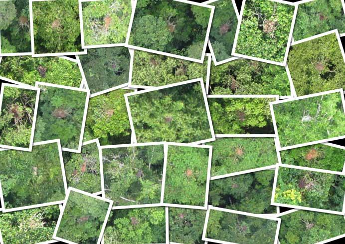 conservation_drone_orangutan_nests