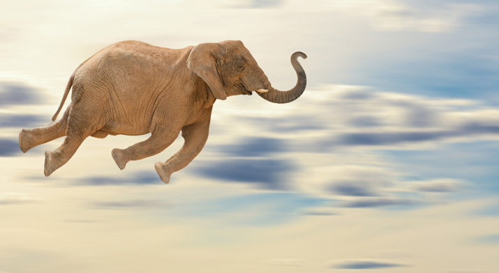 flying_elephant