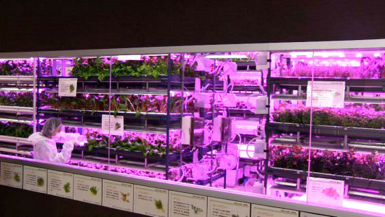 Urban vegetable garden system with LED lighting Robohub