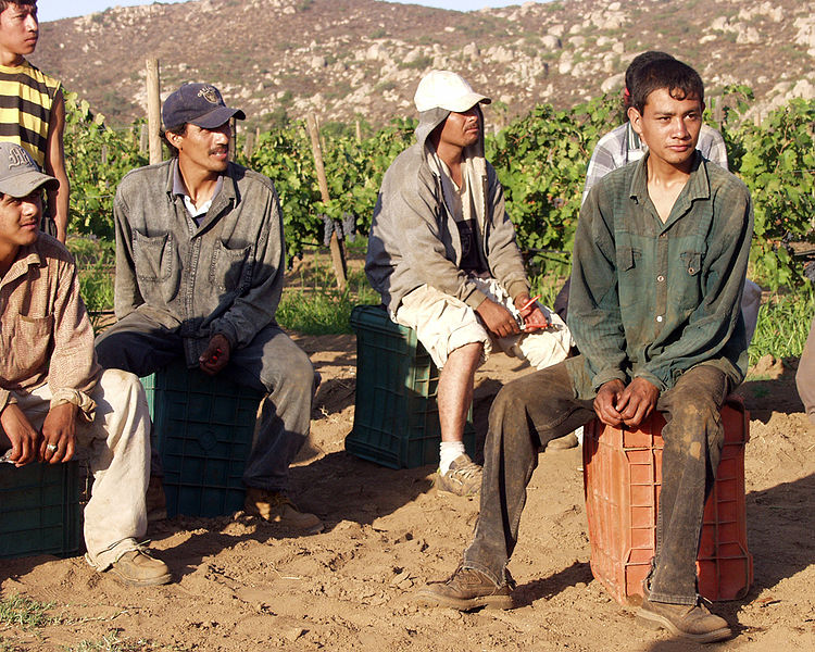 Grape_Field_Workers_Farming_agriculture