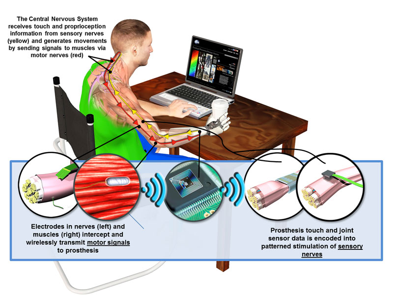 DARPA's Hand Proprioception and Touch Interfaces (HAPTIX) program aims to develop fully implantable, modular and reconfigurable neural-interface systems that would enable intuitive, dexterous control of advanced upper-limb prosthetic devices. Source: DARPA.