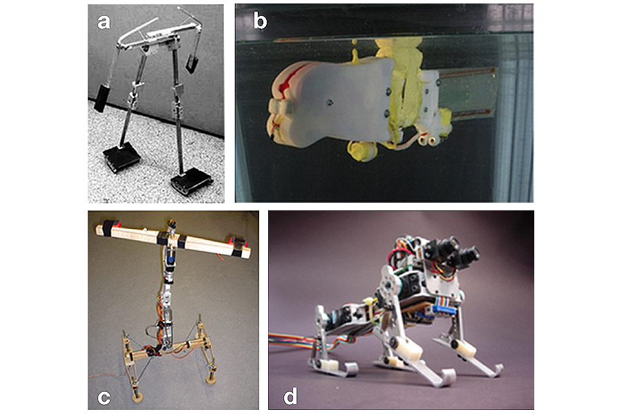Caption: (a) The Cornell passive dynamic walker (Collins et al., 2001); (b) Wanda by Ziegler et al., 2006; (c) Puppy and (d) Stumpy by Fumiya Iida (Source: Iida and Pfeifer, 2004)