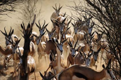 Drone_Adventures_Kalahari_San_range