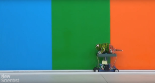 Mechanical Chameleon through Dynamic Real-Time Plasmonic Tuning. Source: Wired UK/youtube