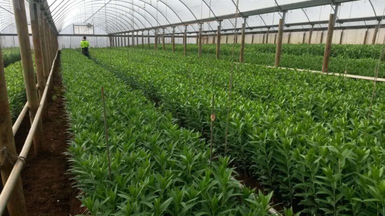 agtech-farming-robotics-robotfarming