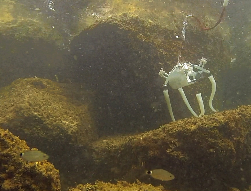 1 / 4 Dr Serchi and his team made a robot prototype that looks like an octopus with the hope that a final version can act as a deep sea repairman. Image credit: Age of Robots, M. Brega