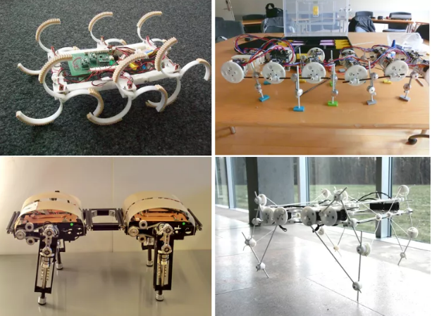 Researchers are creating robots that can move in a variety of environments, just like the animals that inspire them. Images courtesy of Locomorph