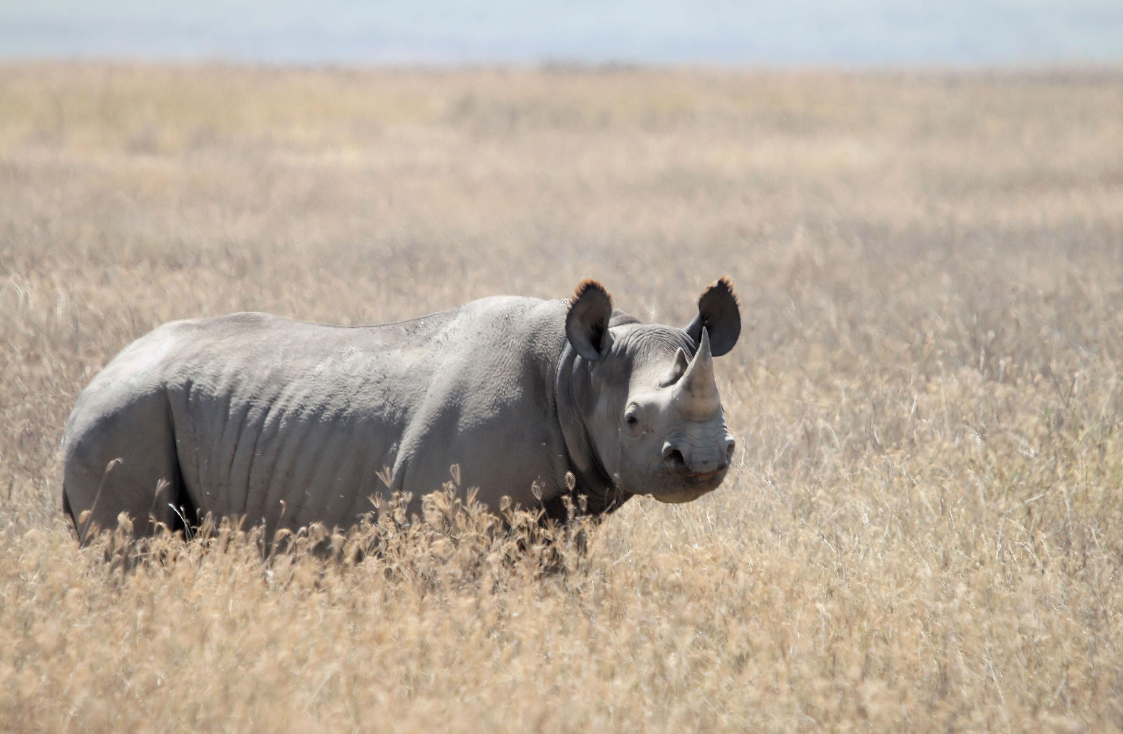 Black-rhino-Yoki-WC