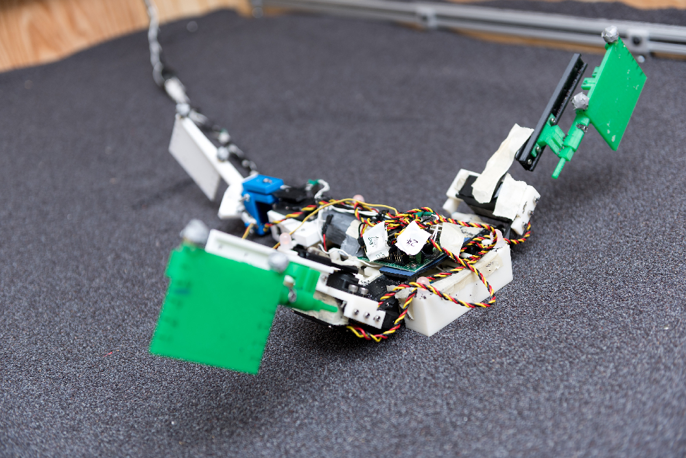 "Image shows the ""MuddyBot"" robot that uses the locomotion principles of the mudskipper to move through a trackway filled with granular materials. The robot has two limbs and a powerful tail, with motion provided by electric motors. Credit: Rob Felt, Georgia Tech"
