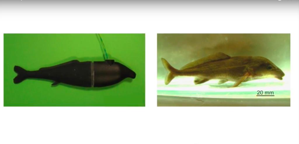 dummy-fish-2