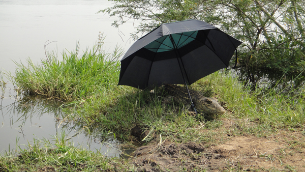 Spy Croc keeps cool under the umbrella (photo: Kamilo Melo)