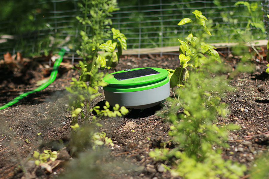 Tertill A Weed Whacking Robot To Patrol Your Garden Robohub