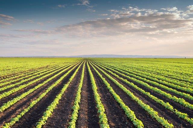 Robotic Weeding and Harvesting | Robohub