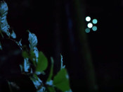 Courtship of the drone fireflies: A short movie with flying robots and lights