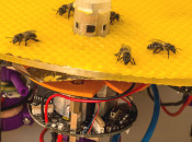 Robot bees open the lid on hive behaviour